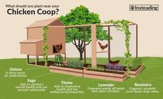 chicken coop designs Dogs is part of Diy Chicken Coop Plans Ideas That Are Morningchores - what to plant near your chicken coop Chicken Garden, Backyard Chicken Coops, Backyard Farming, Chickens Backyard, Plants For Chickens, Small Chicken Coops, Simple Chicken Coop, Urban Chickens, The Farm