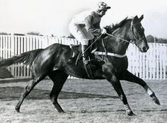 """""""Queen Mother Champion Chase Winner 1971 Crisp 8 y o - Paul Kelleway - Fred Winter - Sir Chester Manifold"""" Racehorse, Queen Mother, Thoroughbred, Horse Racing, Crisp, Champion, Daughter, Horses, Gallery"""