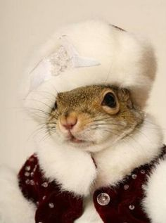 A very classy squirrel.