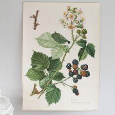 XL Vintage botanischen drucken Blackberry von BonnieandBell auf Etsy