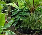 tropical garden ideas and designs - Bing Images