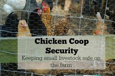 How to go about adding extra layers of chicken coop security barriers. Using multiple layers of chicken coop security to ward off predators. Chicken safety