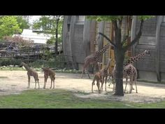 Diergaarde Blijdorp Rotterdam Zoo - YouTube