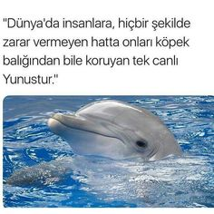 Bilgi Like Animals, Animals And Pets, Cant Stop Loving You, Interesting Information, Weird Facts, Karma, Quotations, Life Quotes, Joker