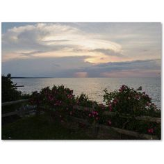 Trademark Fine Art Roses in Bloom Along the Lake Canvas Art by Kurt Shaffer, Size: 35 x 47, Blue