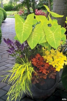 Look at that chartreuse elephant ear and the hakenochloa 'All Gold.' Yes. <-LOVE these colors.