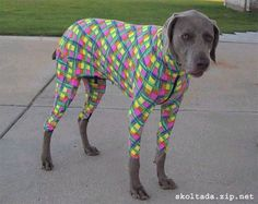 Funny Dressed Up Dog / Photos 2012 / Funny And Cute Animals on imgfave Cute Dog Pictures, Dog Photos, Animal Pictures, Clothes Pictures, Weird Pictures, Funny Dogs, Cute Dogs, Funny Animals, Cute Animals
