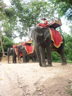 Elephants at Bakong Temple in Angkor (Siem Riep, Cambodia) Photo by Julie Anne Ines