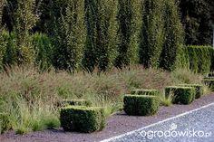 DUŻY OGRÓD małej ogrodniczki 1 - strona 717 - Forum ogrodnicze - Ogrodowisko