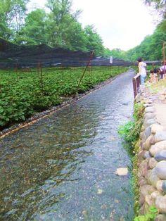 日本で唯一のわさびテーマパーク 「大王わさび農場」
