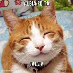 Gatito  que me estas dicieendo?? #Memes Creados por los usuarios  #quebolu #queboluFan #meme www.quebolu.com