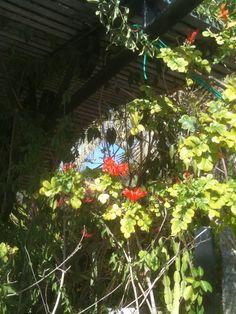 Plants, Flowers, Plant, Planting, Planets