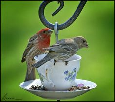 Water in the cup..seeds on the saucer. What a unique bird feeder!