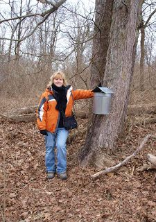 Maple Syrup, making maple syrup, and history of sugaring. Backyard maple syrup production, how to tap maple trees