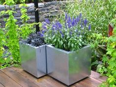 The blue annual salvia is fine but I really liked the containers in this modern garden design