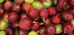 Probabil ca ați vazut în hipermarketuri sau la plafar, agrise, in general agrise uscate. Agrisa Indiana apartine grupului cu cele mai faimoase plante din medicina. Pentru mai bine de 500 de ani, indienii au folosit acest fruct miraculos.