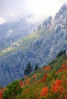 The Alpine Loop in American Fork canyon near Orem, Utah, USA is a beautiful place to take a drive, or a hike, during the autumn. Beautiful World, Beautiful Places, Beautiful Pictures, Alpine Loop, American Fork Canyon, Orem Utah, Utah Usa, Travel Images, Places To See