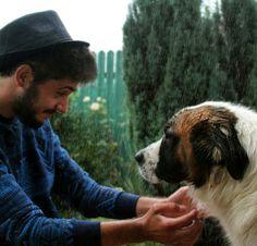 Saint Bernard dog big dog romanian traditional h&m