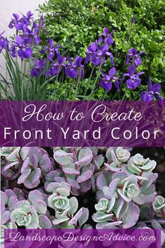 Boxwood, iris, sedum Find out how to create beautiful color in your front yard, back yard or wherever you like! Or let me help you! Both of these plants are extremely low maintenance as are many others.