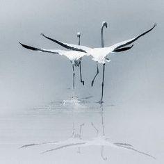 Amazing Shot by lorene