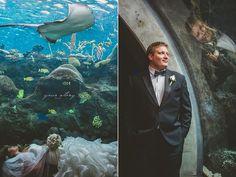 Carolyn & Jon's Florida Aquarium Wedding