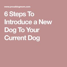 6 Steps To Introduce a New Dog To Your Current Dog