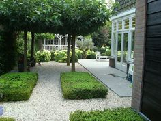 Bankje onder dakplatanen - love these low clipped topiary rectangles.