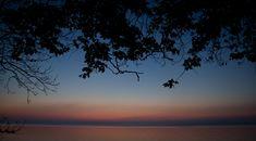Moesgaard Siluetter! #favouritespot #karmaspot #moesgaardforest #aarhusbugten Aarhus, Celestial, Sunset, Outdoor, Outdoors, Sunsets, Outdoor Games, The Great Outdoors, The Sunset