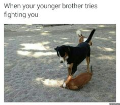 When your younger brother tries fighting you #Funny #Memespic.twitter.com/vg3c8qGIzG http://ibeebz.com