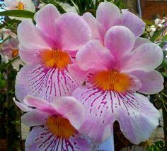 Orquideas de Colombia