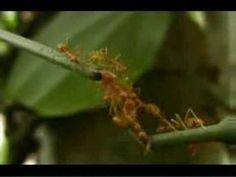 Trabajo en equipo: hormigas