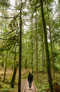 Cathedral Grove in MacMillan Provincial Park is an old-growth forest with trees up to 800 years old - a worthy stop on the drive from Nanaimo to Tofino (Vancouver Island, British Columbia, Canada).