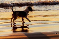 Dog on the Beach in Oceanside - November 27, 2013 by Rich Cruse on 500px