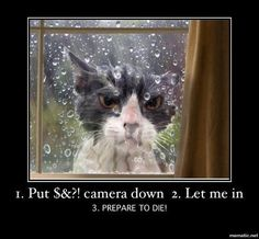 Funny grumpy cat in the rain Animals And Pets, Cute Animals, Wild Animals, Cat Fails, Animal Fails, Angry Cat, Angry Birds, Photo Chat, Tier Fotos
