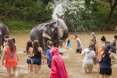 Thailand-Elephant-Village-Initiative - Follow our GLA summer blog to read about first-hand student experience while volunteering abroad!