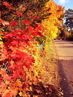 Autumn leaves <3 So beautiful!!!