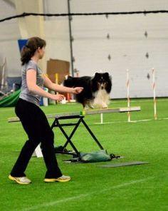 Is your dog too focused on you? Developing a balance between handler focus and obstacle focus is an important skill for every agility dog.