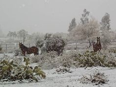 Snow in Cave Creek AZ