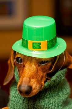 Image result for st patrick's day dachshunds