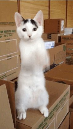 Cat gif