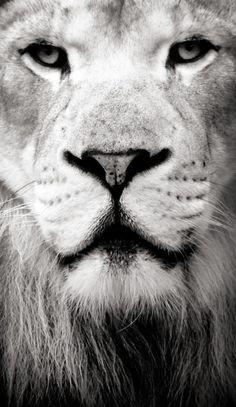 Lion of Judah~Selah