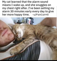 Cat-Related Memes & Posts For The Feline Lovers - Memebase - Funny Memes cute food diy garten witzig Cute Funny Animals, Cute Baby Animals, Funny Cute, Animals And Pets, Cute Cats, Funny Kitties, Animal Babies, Adorable Kittens, Crazy Cat Lady