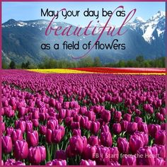 Beautiful day like field of flowers quote via Start from the Heart at www.Facebook.com/StartFromTheHeart