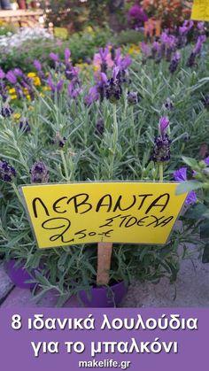 8 ιδανικά λουλούδια για το μπαλκόνι μου μόνο με 16 ευρώ. Όταν λέω ιδανικά λουλούδια δεν εννοώ ιδανικά μόνο για την ομορφιά τους. Ιδανικά για μένα είναι τα πιο ανθεκτικά, που δεν θέλουν ιδιαίτερη περιποίηση και που κοστίζουν λιγότερο. Vegetable Garden Design, Small Garden Design, Aloe Vera Face Mask, Houseplants, Clean House, Holiday Parties, Garden Plants, Home And Garden, Backyard