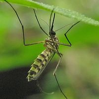Recognizing the workings of Oklahoma City Pest Service is vital to disinfecting your property. For this you should decide on a business with sufficient knowledge concerning particular basic vermin control methods. Check this link right here http://www.oklahomacity.pestservicenetwork.com/ for more information on Oklahoma City Pest Treatment.