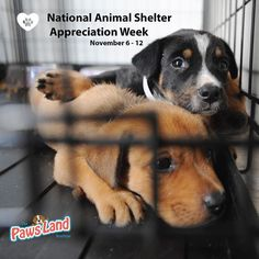 In celebration of National Animal Shelter and Rescue Appreciation Week from Nov. 6-12 The Humane Society of the United States encourages pet lovers to reach out and support their local shelters and rescue groups.  Approximately 3500 animal shelters across the United States serve the estimated 6-8 million homeless animals who need refuge each year and many more animals find themselves in need of the services provided by local rescue groups.  National Animal Shelter and Rescue Appreciation…