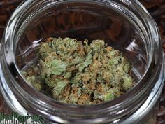 What Kind Of Marijuana Are You? You are the magical Stevie Wonder! This is a very special, berry-infused strain of Marijuana that not only offers subtle relaxation, but a burst of energy as well! Like your musically green counterpart, the properties you possess contribute to a clear, cerebral thought process and enhance communication. You are focused with an uplifted spirit and euphoric outlook, making you one hell of a Mary-Jane plant. You taste like tea and have an earthy essence.