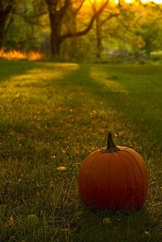 I love Halloween and autumn. Anyone wanna join me for a Halloween party just ask, okay? And don't be afraid to ask me anything, halloween/autumn related or not! Autumn Day, Autumn Leaves, Autumn Scenes, Fall Pictures, Fall Images, Fall Photos, Nature Photos, Autumn Aesthetic, Happy Fall Y'all