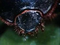 YouTube Video~ Beetles: Backyard Science (clip); YouTube clip about Beetles