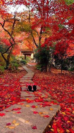 Autumn in Kyoto, Japan. Kyoto is a city located in the central part of the island of Honshu. The Places Youll Go, Places To See, Beautiful World, Beautiful Places, Japan Travel, Japan Tourism, Wonders Of The World, Paths, Scenery